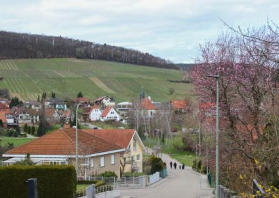 Weingut Pleisweiler Oberhofen